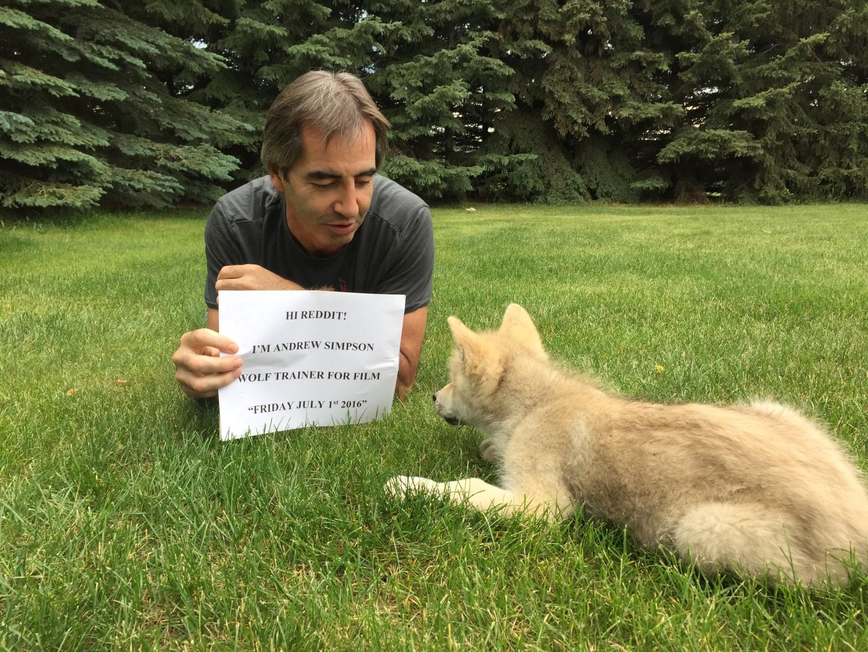 Wolf Trainer Reddit AMA Recap