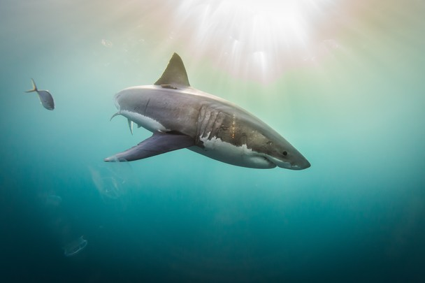 Sharks vs. Humans – Are They The Danger, or Are We?