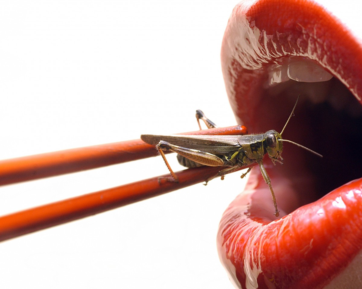 Would You Make Insects a Part of Your Diet to Save The Planet?