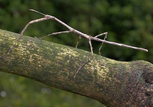camo insect