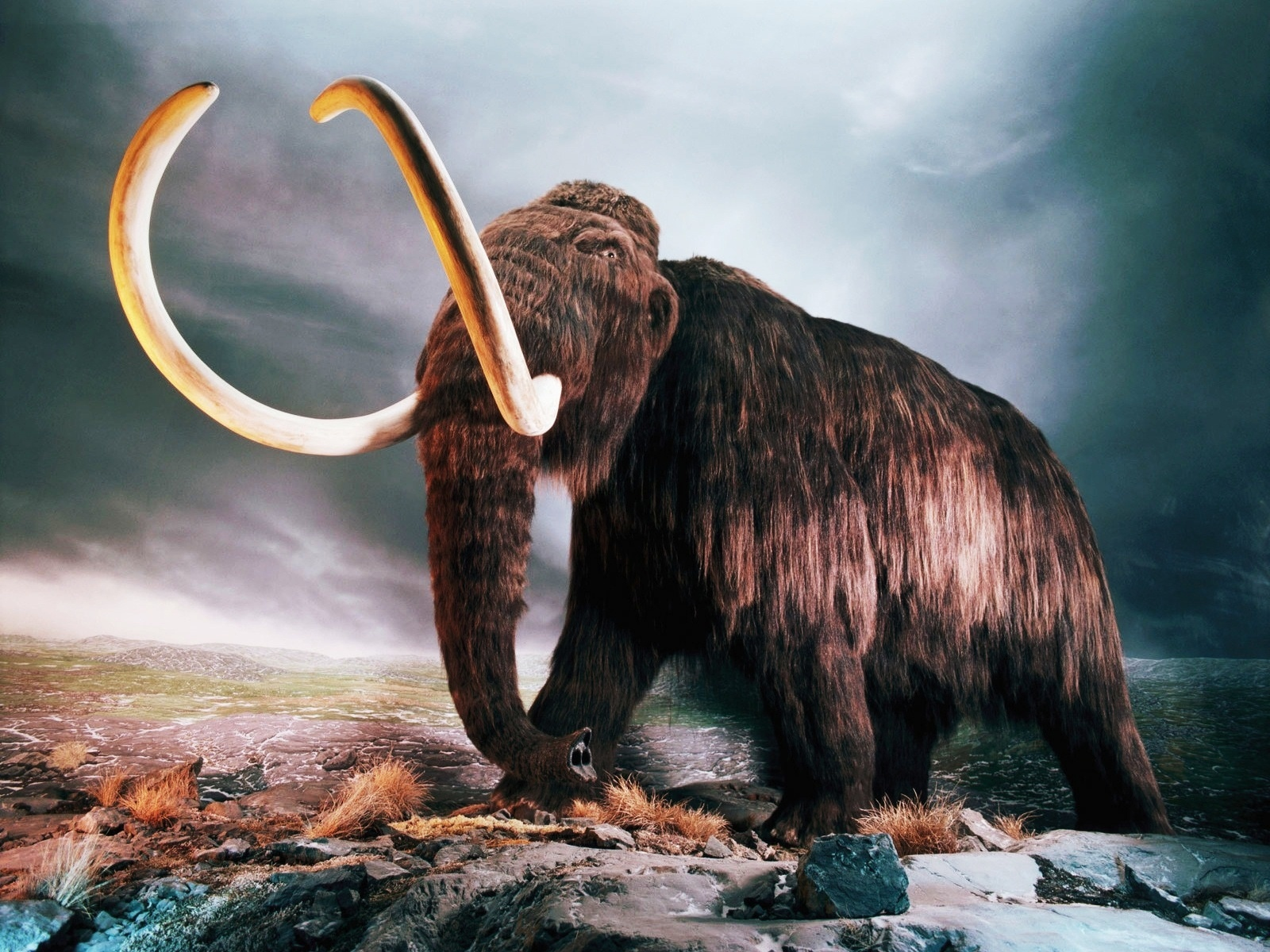 Cloning Woolly Mammoths and Global Warming – What's the Connection?