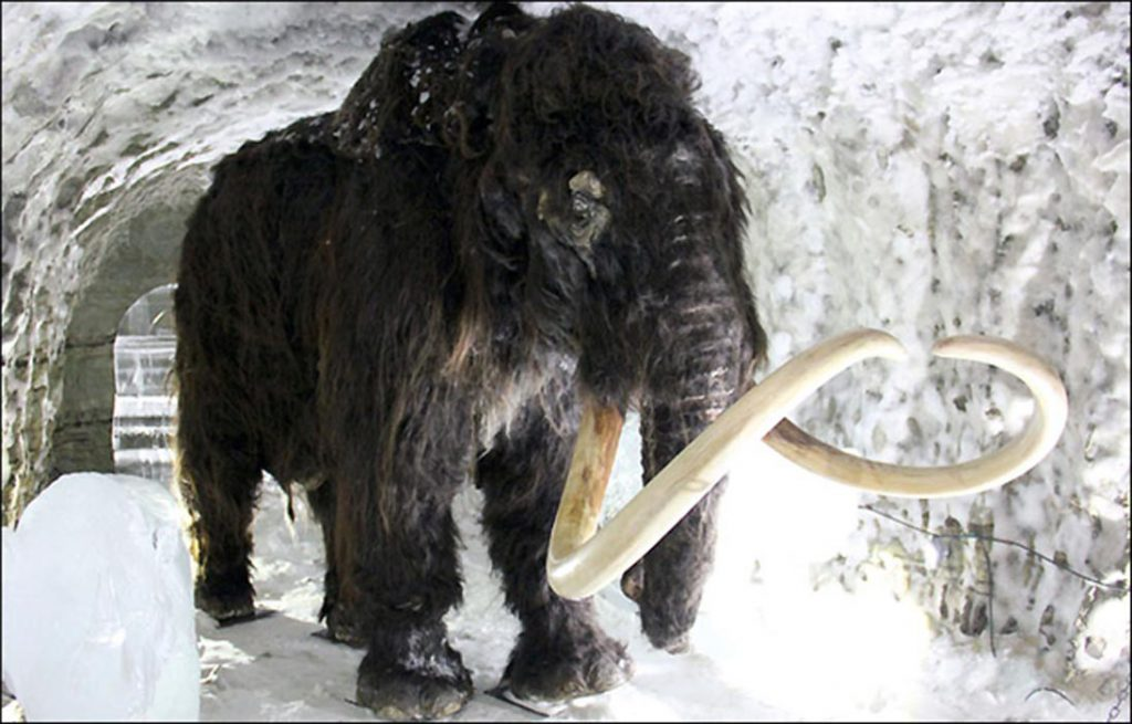 Frozen Woolly Mammoth