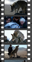 Instinct Animals for Film - Weibo Reel 001