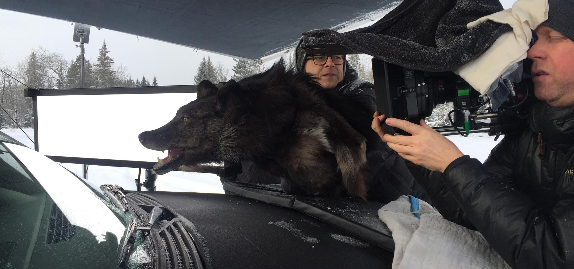wolf head body fur
